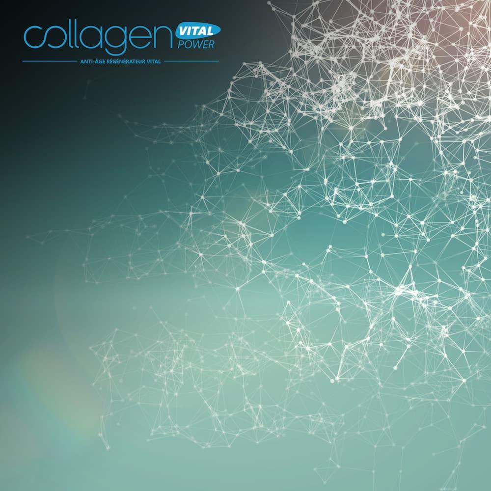 collagen molecule